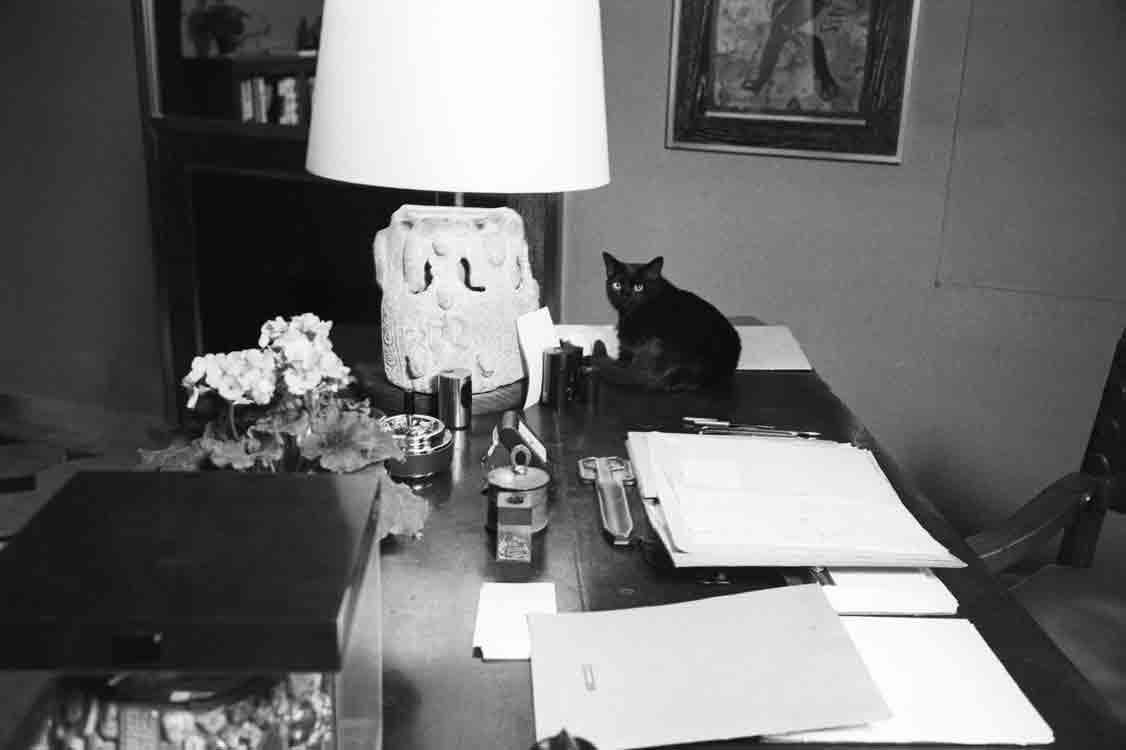 queue à l'intérieur de la chatte noire